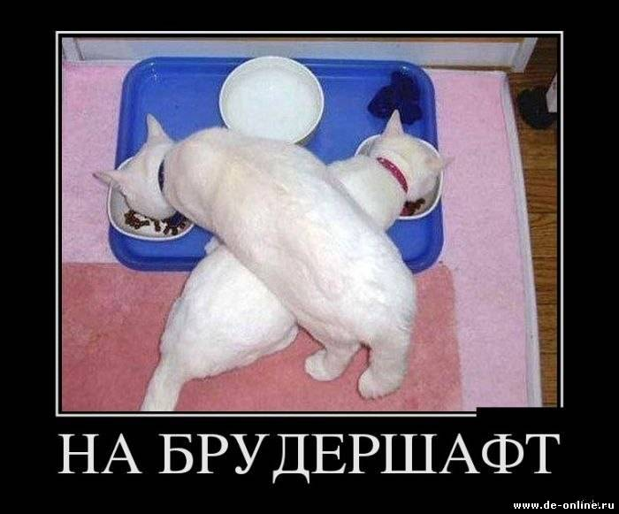 http://dimaspb.ucoz.ru/_fr/12/3359119.jpg